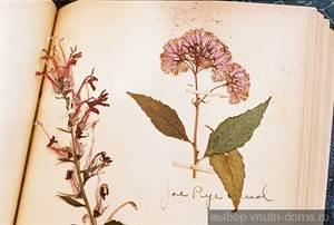 Фото гербария своими руками