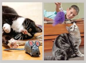 Что сделать для кошек своими руками фото 456