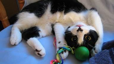 Что сделать для кошек своими руками фото 870