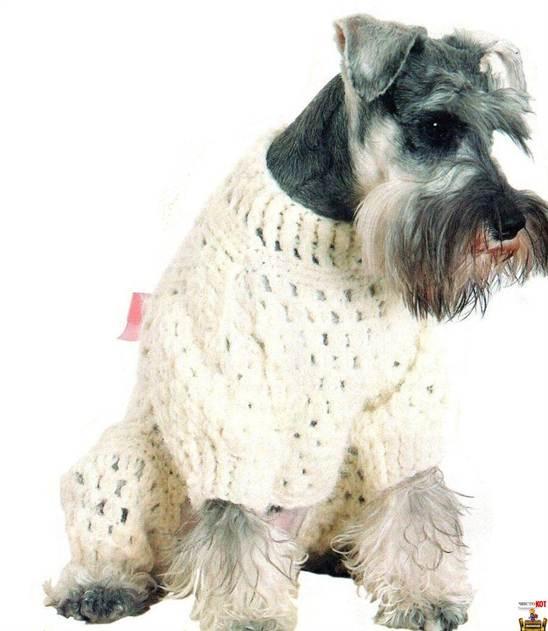 Связать одежду для собак своими руками