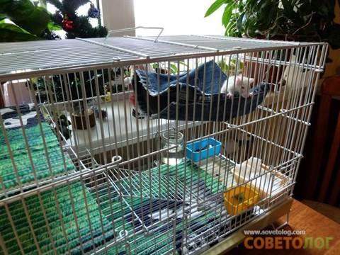 Как сшить гамак для крысы