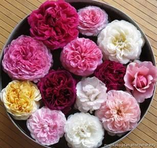 Пионовидные розы из фоамирана