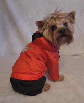 1-430 Выкройки одежды для собак: пошив одежды и схемы