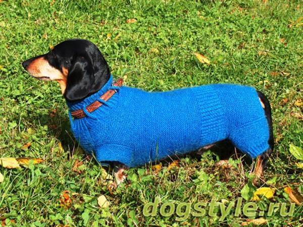 комбинезон для собак мелких пород мастер класс с описанием и фото